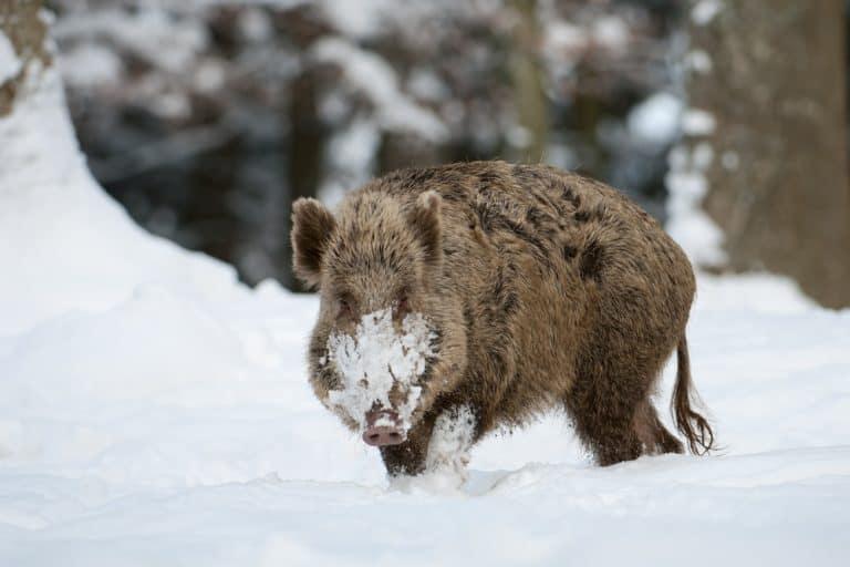 Jagen bei Kälte