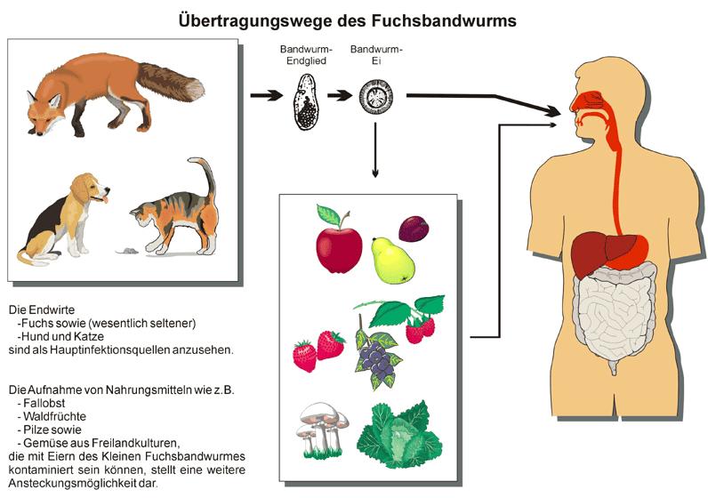 Jagd Im Stromberg